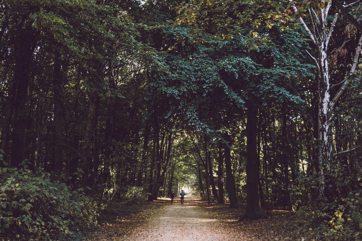 Accountability partner: je kunt er ook een boswandeling mee maken. Foto door Noralí Emilio op Unsplash